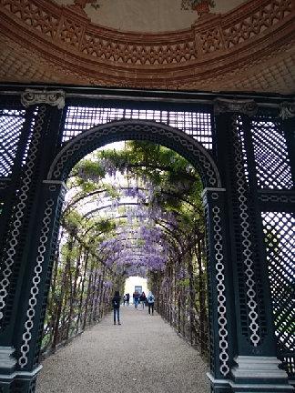 シェーンブルン宮殿 藤のアーチ