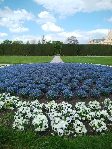 チェコ_レドニツェ城の青い花壇